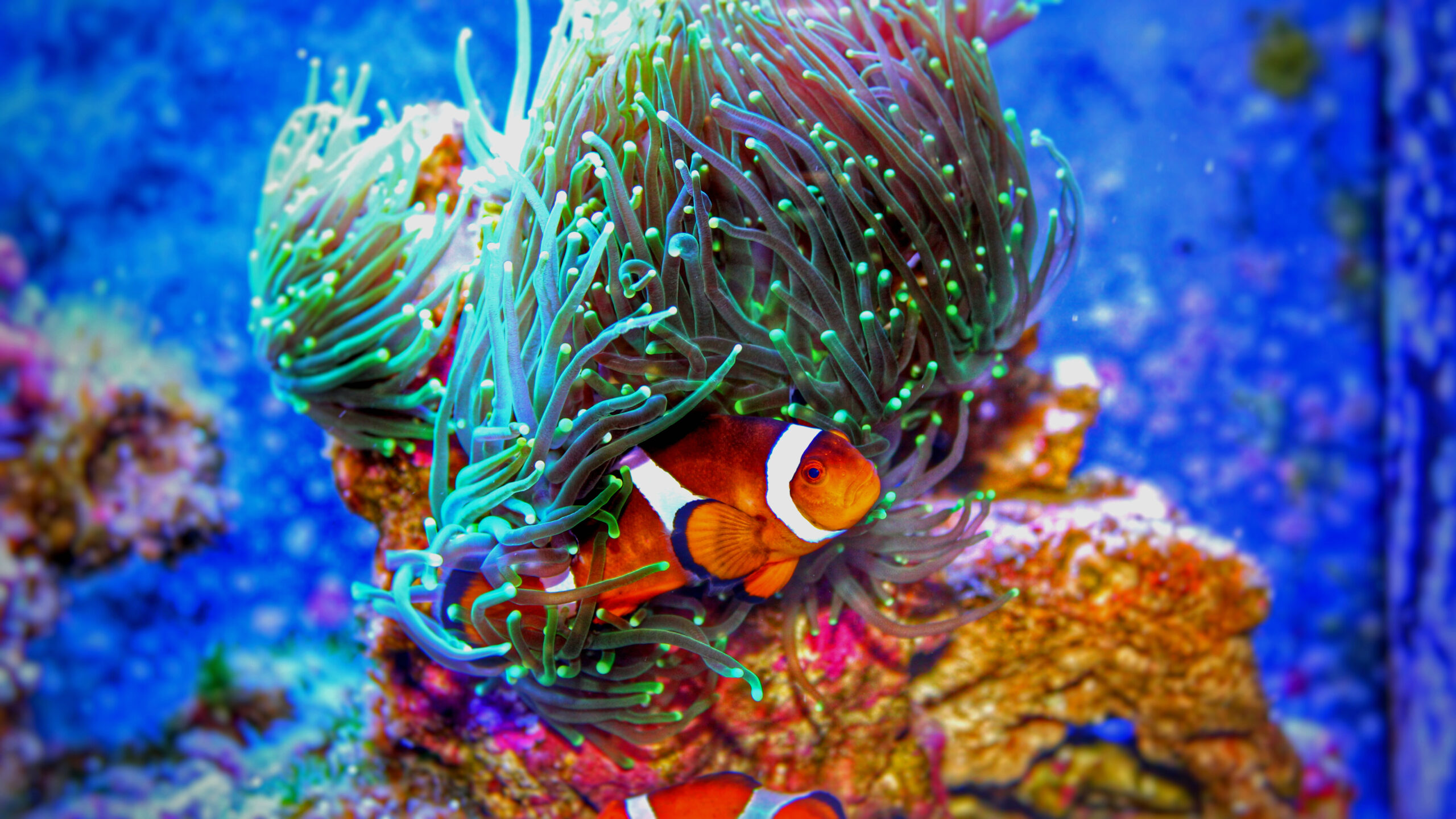 Coral Reefs and it's inhabitants